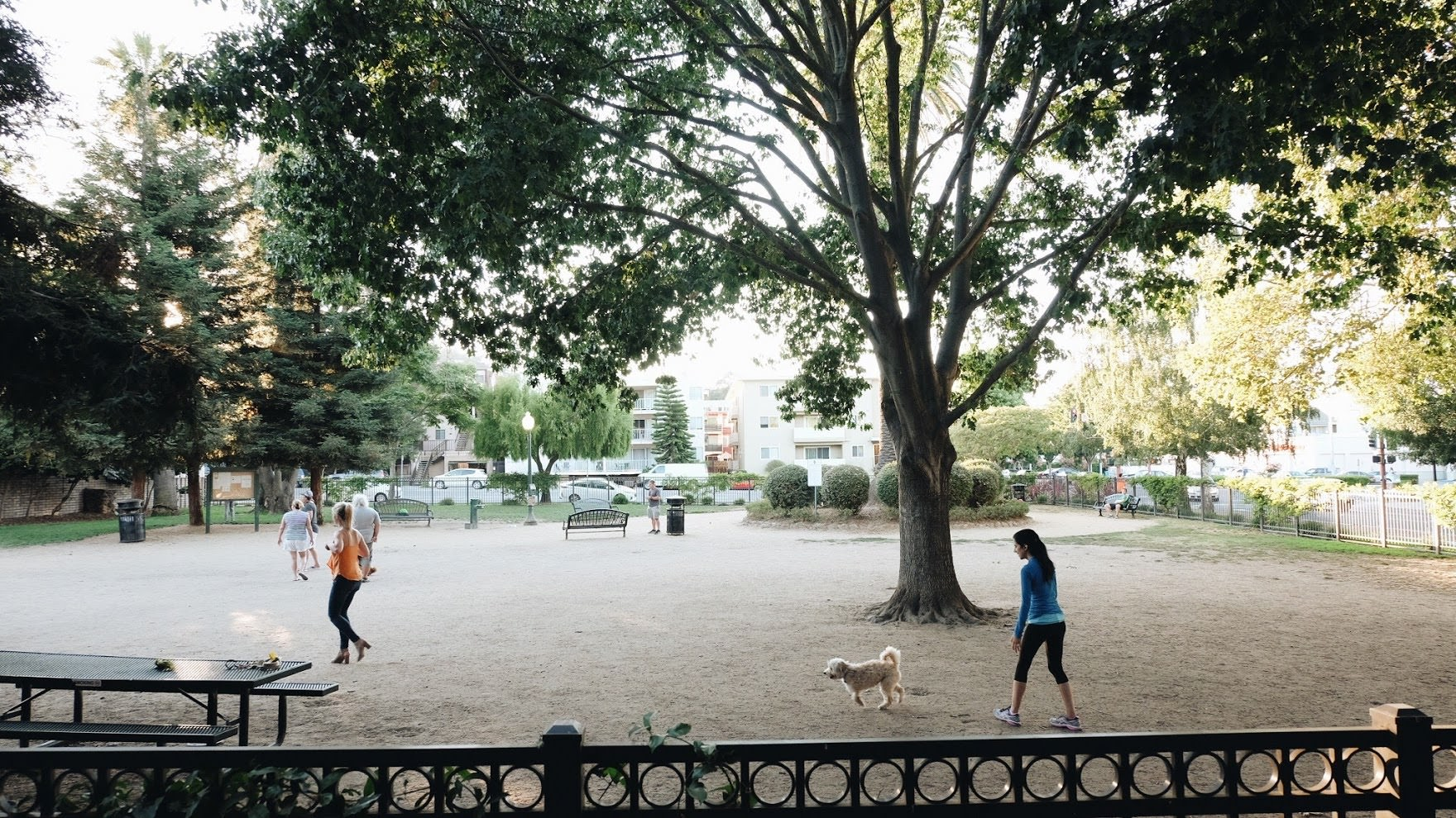 City Hall Dog Park